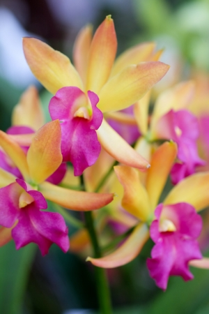 Pick an orchid 187 a keen hobbyist s website of gorgeous orchid photos blog and tips for the